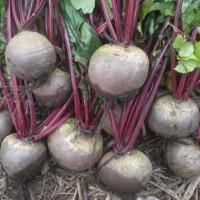 Buah Bit (Beet Root)