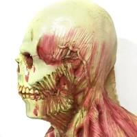 Topeng Anatomi tengkorak Skull latex mask Halloween haloween pesta