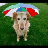 harga Wco8 Topi Payung Headband Umbrella Hat Topi Mancing Golf Unik Outdoor Tokopedia.com