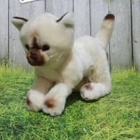 Boneka Kucing Siam standing