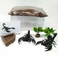 paket edukasi hemat 10 tahun ke atas kalajengking scorpion insect