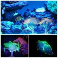 hiasan aquarium tanaman coral menyala efek cahaya - dekorasi air