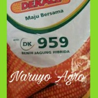 Benih Jagung Hibrida Dekalb 959 (1 kg)