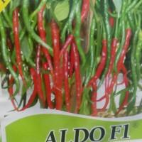 benih bibit cabe merah keriting