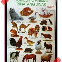 Mainan poster edukasi belajar anak seri binatang jinak domestic animal