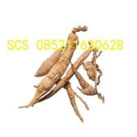 Xi Yang Shen American Ginseng 40 gram yit niu