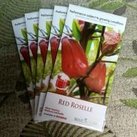 Benih Bibit Herbal Bunga Rosela Merah RED ROSELLE Herb Maica Leaf