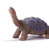 Recur - Aldabra Giant Tortoise