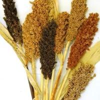 Jual (Sale) Red Sorghum Rice / Beras Sorghum Merah 1 Kg Murah