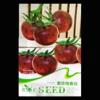 Jual Purple pearl tomato Murah