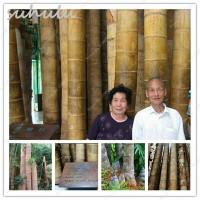 Biji Benih Tanaman Bambu raksasa / headset / Celana Chino / keyboard