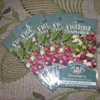 Jual Benih Strawberry Alphine Red & White Mr.Fothergill's, kemasan asli Murah