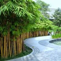 Taman Minimalis | Dekorasi | Desain taman