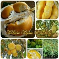 Paket 3 Jenis Bibit Durian Musangking Asli-Montong Jumbo-Bawor Bangkok