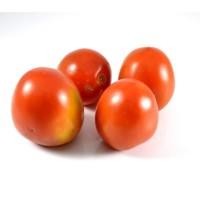 Jual Tomat Murah