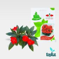 Jual Panah Merah Urban Farming Seed Bunga Impatiens Murah