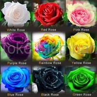 Jual Benih Biji 9 Macam Mawar import Rainbow Pink Black White Red Purple Murah