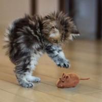 Tikus Mainan Kesukaan Kucing