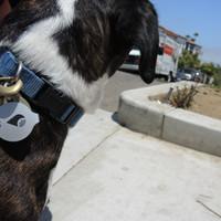 Harga gps tracker terbaik dengan smart phone trackr | antitipu.com