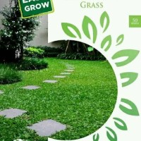 Jual Maica Leaf Rumput Gajah Mini / Elephant Grass Benih Tanaman [50 Benih] Murah