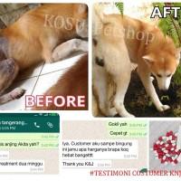 PAKET HEMAT! Obat jamur, alergi pada kulit bulu anjing dan kucing