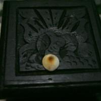 Harga mustika alami batu keong buntet | Hargalu.com
