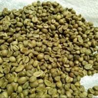 Jual Kopi Lampung (Green Bean) Murah