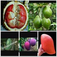 Pake 5 bibit Durian Merah,alpukat mentega,mangga irwin,mahatir,emperor