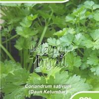Benih Daun Ketumbar - Corriander for Leaf Seeds