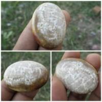 Nama Batu Mulia : Natural Akik Kendit Asal Batu : Bengkulu Dimensi Bat