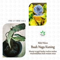 Jual Bibit Buah Naga Kuning - Pohon Dragon Fruit Tanaman Super Bandel Murah