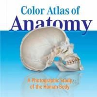 Ebook Yokochi Color Atlas of Anatomy | e book