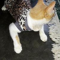 Baju Kucing Trio Macan
