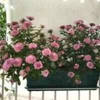 Jual Pot tanaman set gantungan pagar kotak (besar) Murah