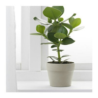 Pot Ikea Oradd Pot Tanaman murah Pot keramik Pot Bunga