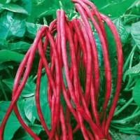 Harga Kacang Merah Travelbon.com