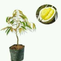 bibit buah durian bhineka bawor