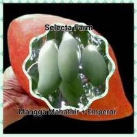 Paket 2 Mangga Jooz (mahatir + emperor) stok terbatas