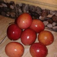 buah markisa/buah markisa segar 500gr