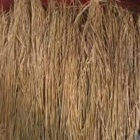 Jual Jerami Padi Kering 500 gram ( alas sarang & Dekorasi ) Murah