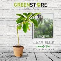 harga Bibit Alpukat Long Green Tokopedia.com