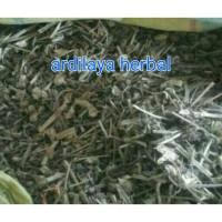 daun ciplukan kering 1000 gr/1 kg