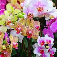 Repro Gambar Lukisan Foto Bunga Anggrek Orchid Custom Order