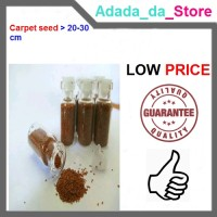 Jual Carpet SEED mini dwarf 3ml (tanaman hias/aquascape) Murah