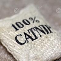 Benih / Bibit / Biji Catnip gan ja kucing Herbs Nepeta cataria import
