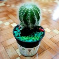 Jual Tanaman Kaktus Mini Noto Magnificus Cluster Murah