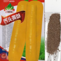 Harga 600 biji benih wortel kuning jumbo s0062   Pembandingharga.com