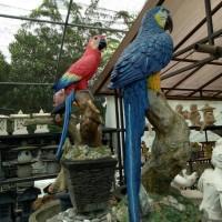 Jual Burung Parrot - Harga Terbaru 2019 | Tokopedia