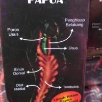Lintah Hitam Papua | Minyak Urut Pria | Minyak Lintah