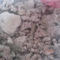 Batu Karang Jahe 1Kg